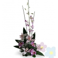Arrangement of Orchids Flavie