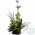 Arrangement of orchids Taiki