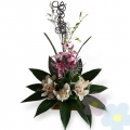 Arrangement of Orchids Aeneas