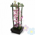 Arrangement of orchids Akari